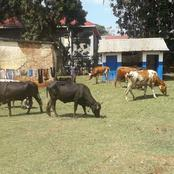 Four Notorious Livestock Thieves Giving Kimilili Residents Sleepless Nights Arrested