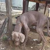 Décès tragiques à Gonzague : Une dame et ses trois chiens meurent dans des conditions mystérieuses