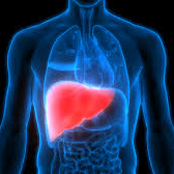 Twelve Signs Your Body Shows You That Your Liver Is Being Damaged