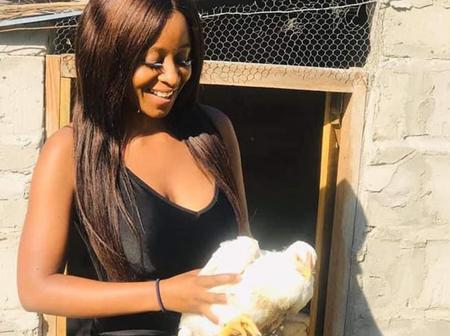 A lady volunteer to buy 200 chicks to help the young poultry farmer whose chickens were killed