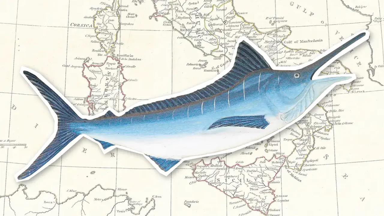Italien: Überfischung des Mittelmeers und Billigimporte verdrängen nachhaltige Schwertfischjagd
