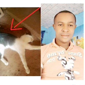 Igbo man finds a cat in his new apartment, after he prayed to God about something disturbing him.