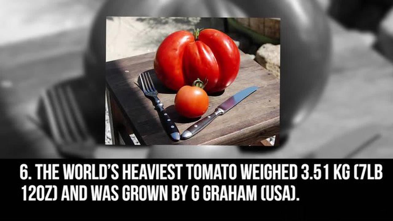 How to grow tomatoes - tips for growing and harvesting tomatoes