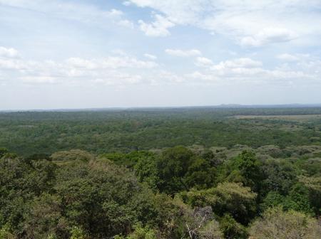 Largest Forest In Western Kenya