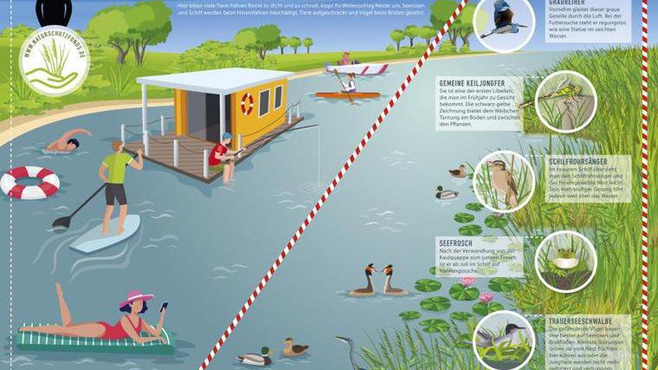 Stadt appelliert: Rücksichtsvolles Verhalten beim Baden und Wassersport in Potsdamer Gewässern geboten