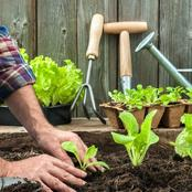 Assess Plant, Soil, and Environmental Conditions Prior to Transplanting