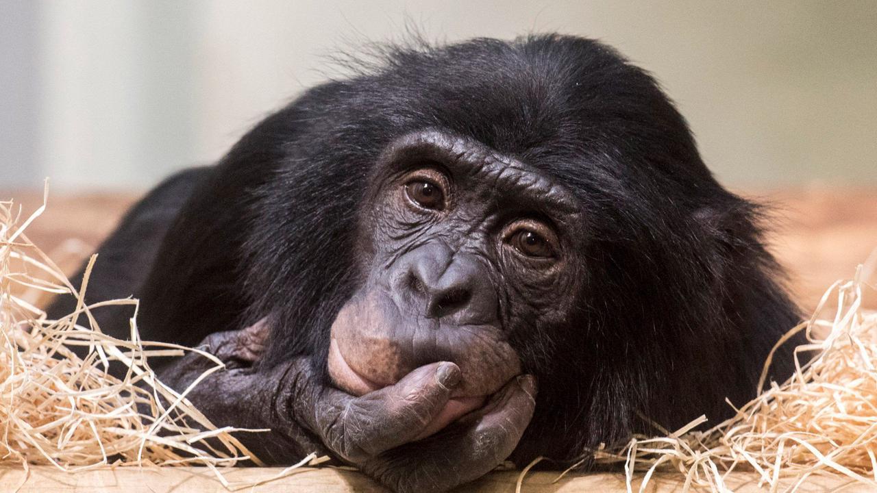 Fünf tierisch bittere Fakten über das Corona-Jahr im Zoo