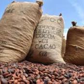 Côte d'Ivoire : agriculture, dans la galère des planteurs de cacao