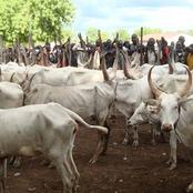 Northeners React As DSS Invites Cattle Dealers Over Food Blockade To The South