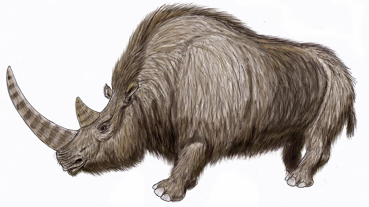 A 20,000-Year-Old Wooly Rhinoceros Was Dug Up From Russia's Permafrost And It's Wild How Intact It Is