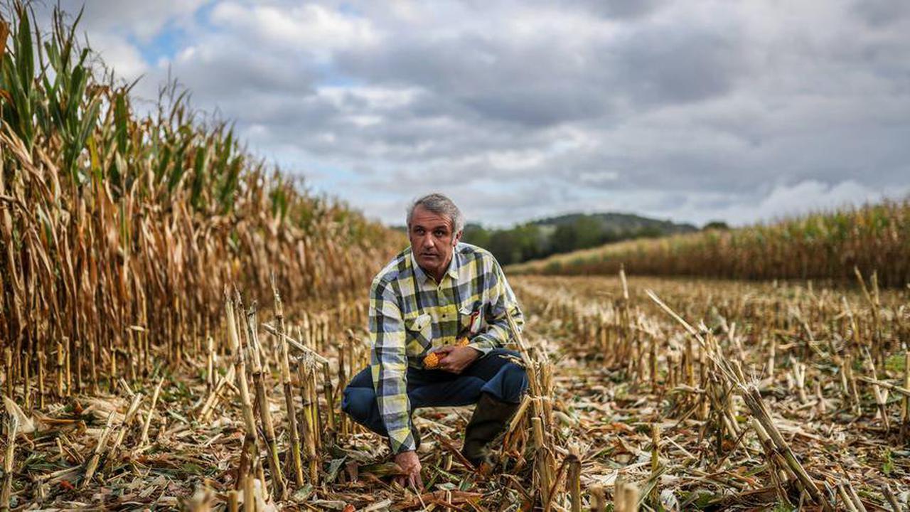 Béarn : la production de maïs est aussi un voyage intérieur