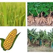 Voici la vraie origine de ces aliments : le riz , le manioc , le maïs et la banane