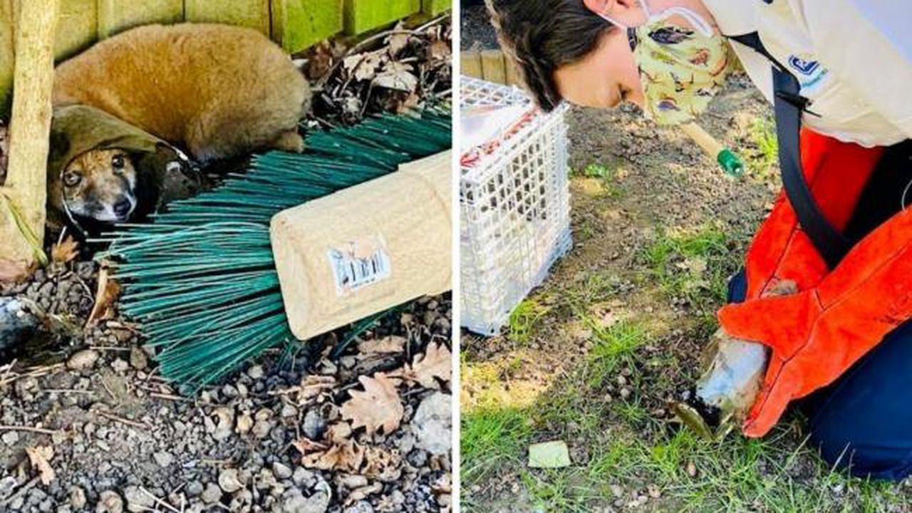 Bromley boy and his mum save tiny fox found with its head stuck in glass jar