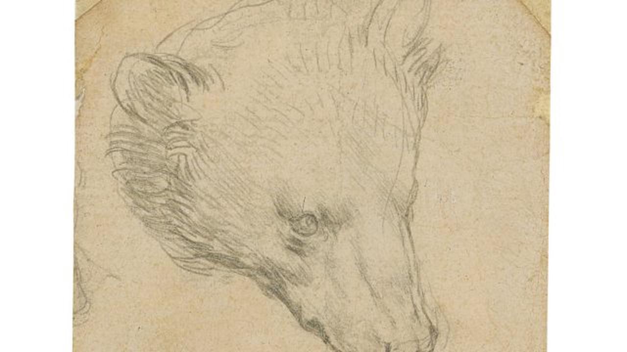 Leonardo da Vinci's bear drawing could fetch £12m at auction