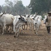 Opinion: Herders Invasion of South West, A lesson for Tiv Nation