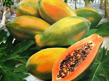 Diseases that pawpaw can cure