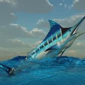 أغلى سمكة في العالم سعرها 2.5 مليون دولار يأكلها اليابانيون .. هذا هو سبب ارتفاع سعرها