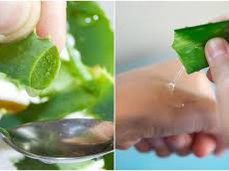 Aloe vera for face and body uses