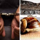 American man arrested at US airport for arriving with 22 Snails, Prekese and other items in luggage