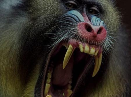 Sad: Monkey Mauls 11-month-old baby to Death in Kitui