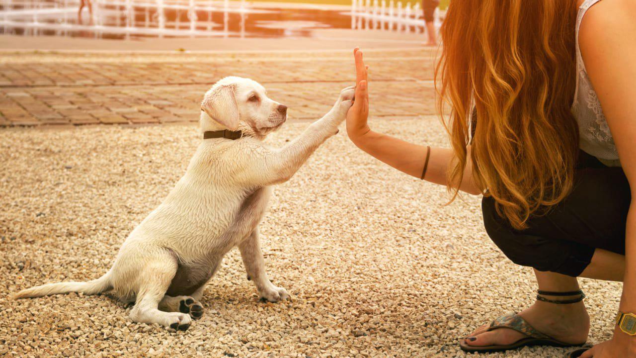 So finden Sie den schönsten Hundenamen