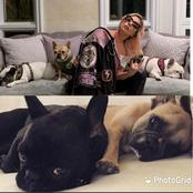 Lady Gaga Offers $500,000 For Anyone Who Finds Her Missing BullDogs