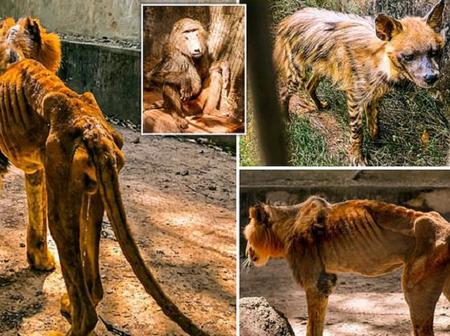 See what was discovered in a Nigerian Zoo that kept people talking