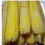 Why You Should Eat Boiled Maize Regularly.  Boiled Maize Have More Health Benefits.