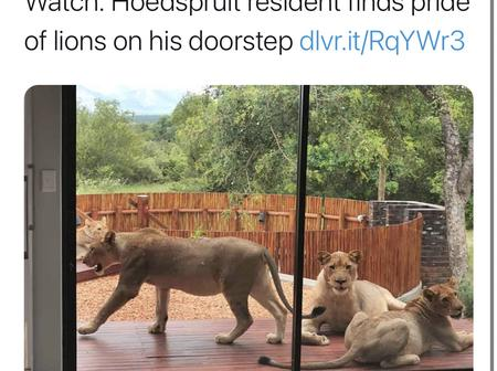 South Africans Feel Like They Are In Jumanji As Wild Animals Roam The Streets.