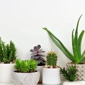 Growing Plants In The Office Plays A Vital Role That Many Don't Know