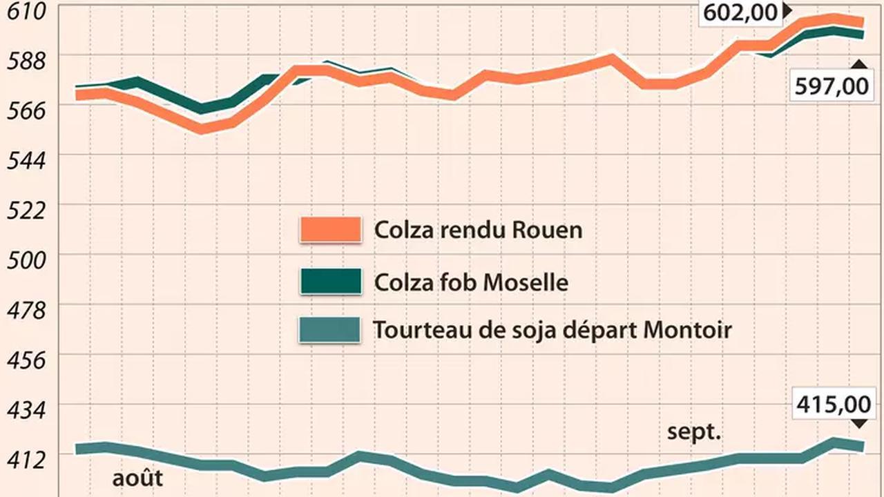 Cotidienne Prix des Oléagineux le 20 septembre : légère baisse des prix du colza, dans le sillage du pétrole et du soja à Chicago