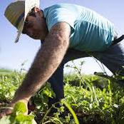 Farmers are more important than Doctors. See why. Opinion