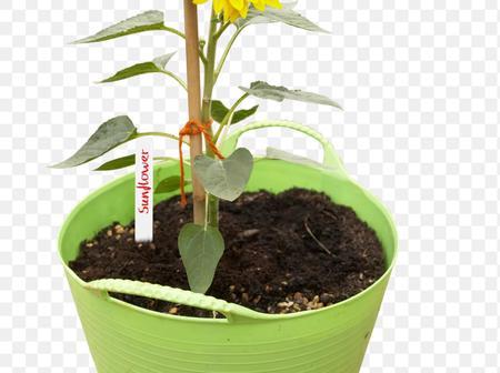 7 ways to grow a flower