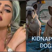 Good News As Lady Gaga's Kidnapped Bull Dogs Return Safely To Her