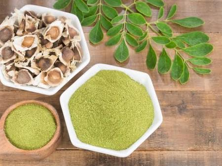 Moringa Benefits For Men and Side Effects
