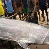 What Do You Know About Swordfish? - See What An Obolo-Ijaw Man Caught In The Deep Sea Of Andoni