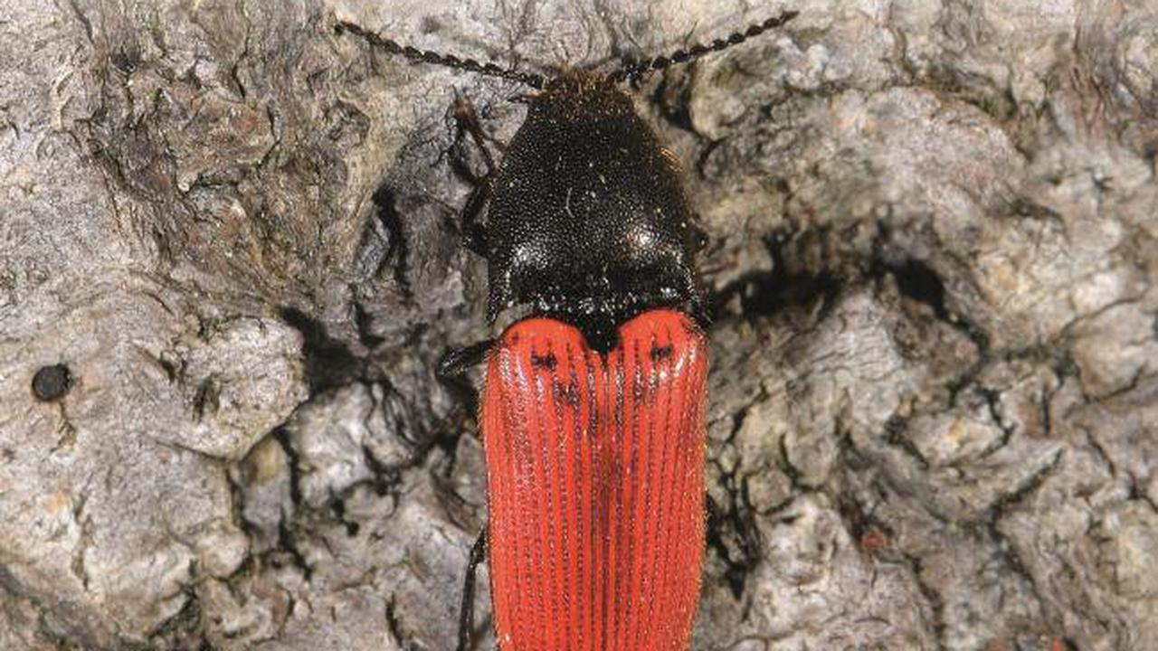 Wild Things Column: A sharp drop in insect populations