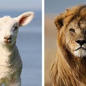 Folklore: The lion tried to eat the sheep after he saved him, here's how a tortoise saved the sheep
