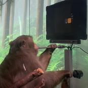 Technology Breakthrough: Monkey Plays Pong With Its Mind