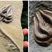 11 spine chilling ancient fossils