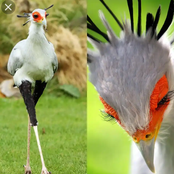 Meet the Secretary Bird with natural makeup and long eyelashes.