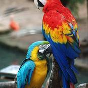 Insolite :dDes perroquets qui insultaient les visiteurs d'un zoo ont été placés en isolement