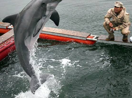 Check Out What The US Navy Specially Train Dolphins For (Photos)