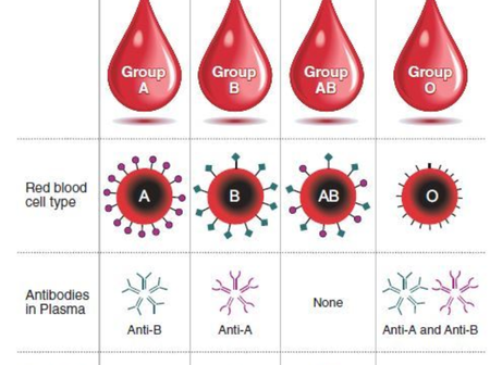 What You Need To Know About Your Blood Group