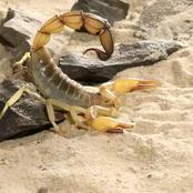 What makes scorpion and scorpion venom so expensive [opinion]