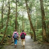 Check Out This Mysterious Forest Where Some People Go To Commit Suicide In Japan
