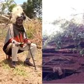 After A Mugumo Tree Fell In Kiambu, Here Is What The Elders Have Finally Concluded