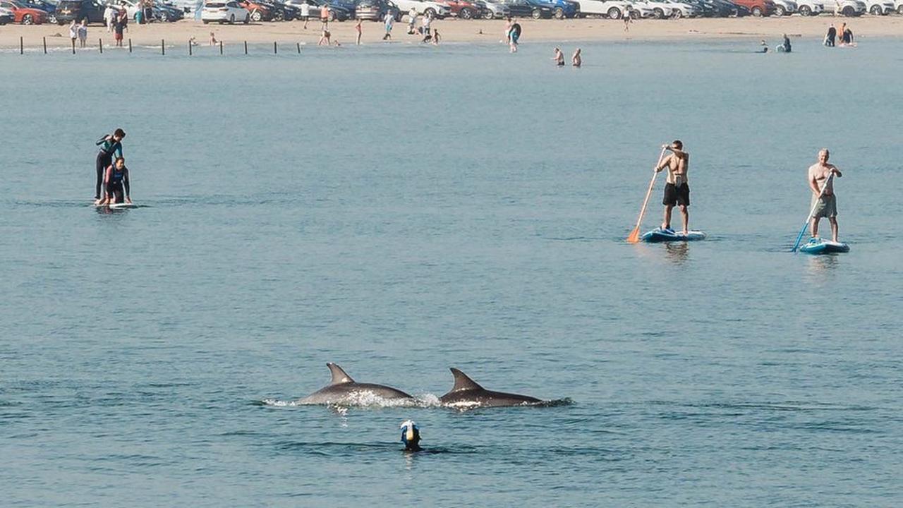North coast dolphins and a Rathlin shark