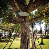 Checkout The Tree in Pakistan which has been under arrest for 123 years, this is its crime
