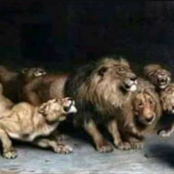 Meet The Nigerian Prophet who got killed by lions while trying to act like Daniel in the Bible